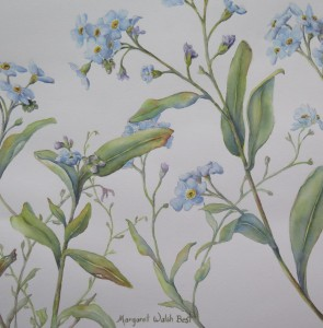 Detail Forget-Me-Not watercolour by Margaret Walsh Best